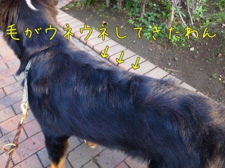 20110606-082005.jpg