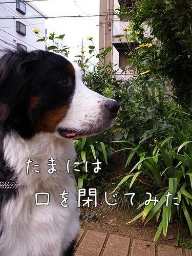 20110630-075140.jpg