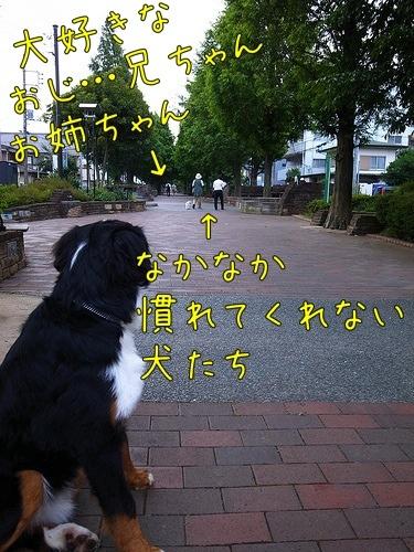 20110707-080020.jpg