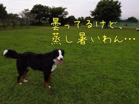 20110727-073731.jpg