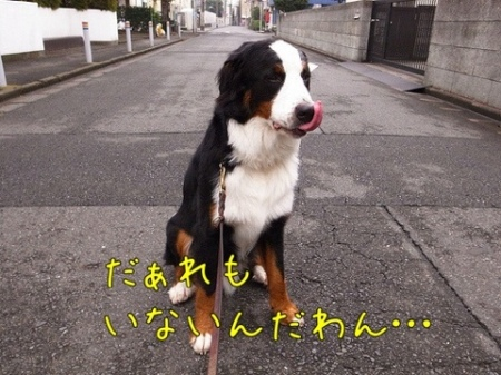 20110729-074036.jpg