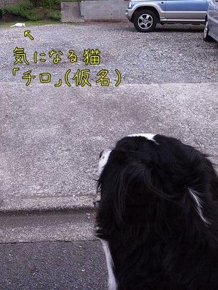 20110811-075258.jpg