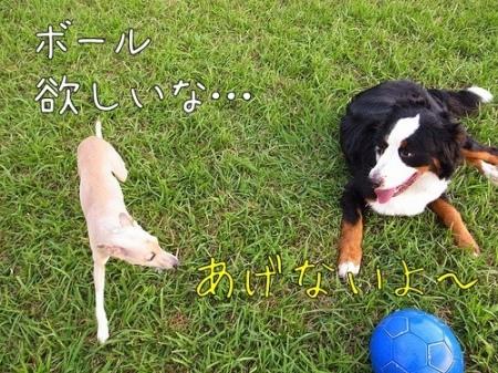 アイニー、クーフン、サッカーボール