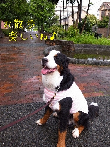 アイニー、雨、散歩