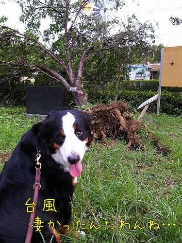 アイニー、倒木、台風