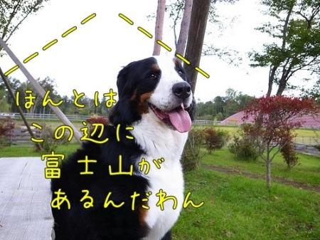 アイニー、ドッグリゾートワフ、富士山