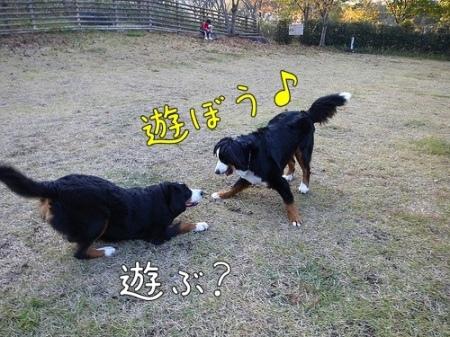 アイニー、鮎沢PA、ドッグラン