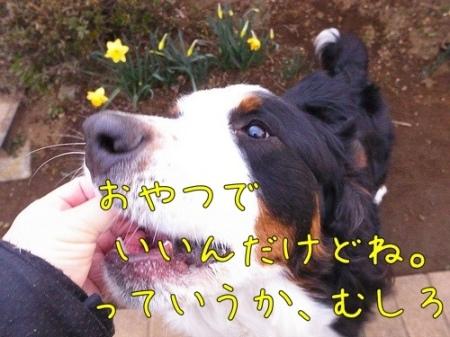 20120322-081641.jpg