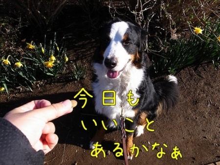 20120325-090911.jpg