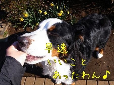 20120325-090921.jpg