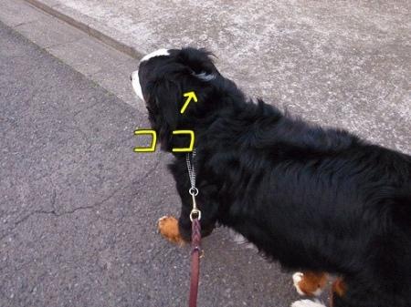 20120329-063112.jpg