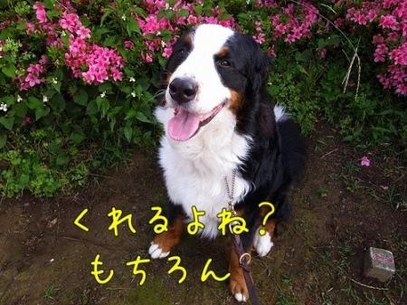 20120530-081349.jpg