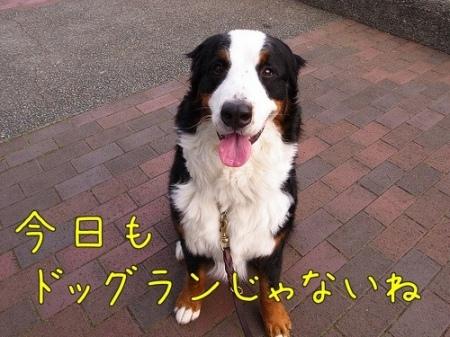 20120601-084503.jpg
