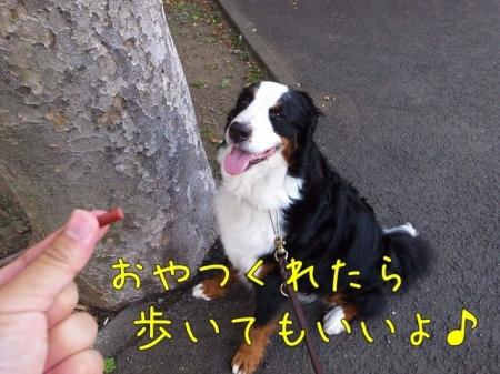 20120730-075150.jpg
