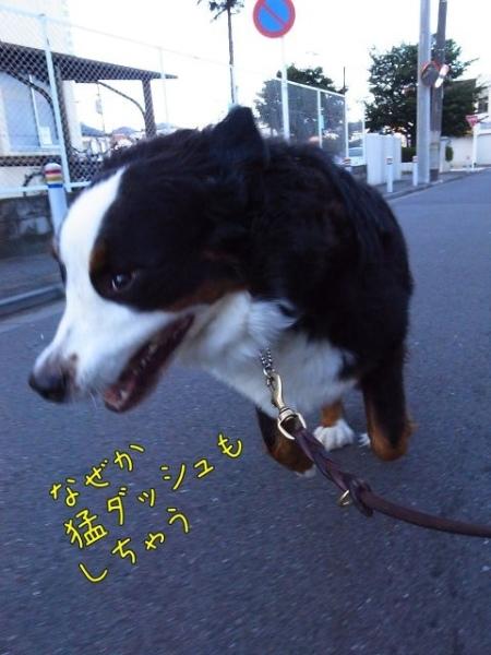 20120802-081713.jpg