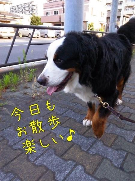 20120803-081454.jpg