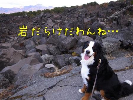 20121112-073325.jpg
