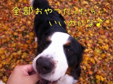 20121113-055453.jpg
